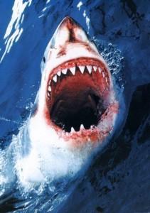 machoire de requin